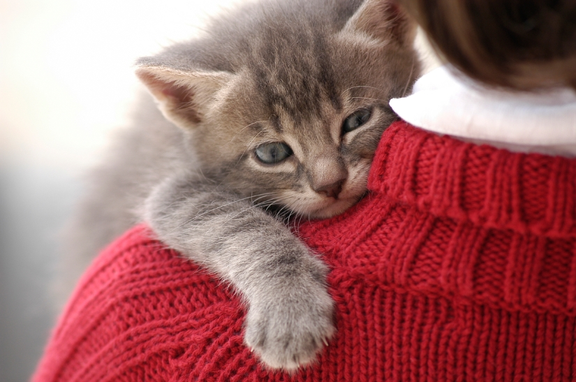 Kitten on shoulder
