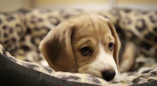 o-SAD-DOG-DIARY-facebook