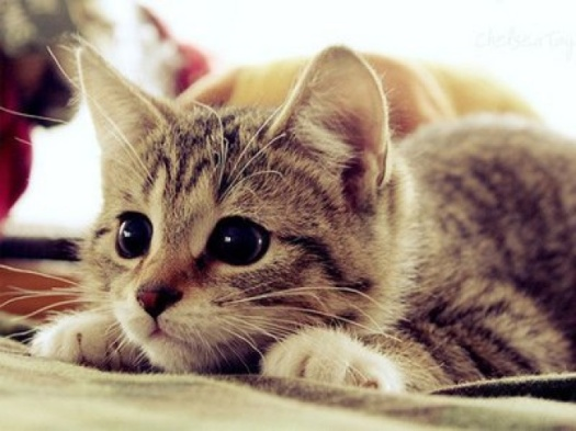 cute-cat[1]