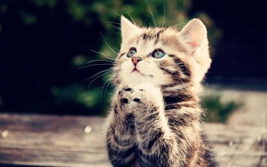 Cute-Cats-cats-33440930-1280-800-1