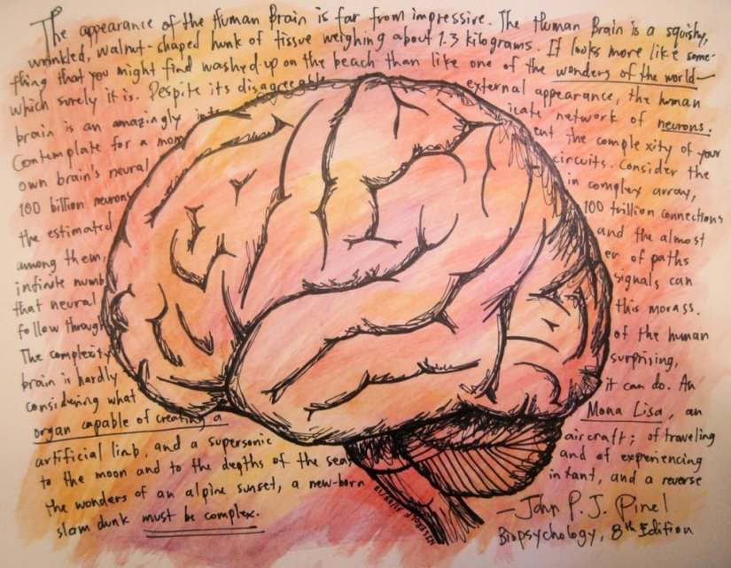 biopsychology_by_njserolf-d61d2e2